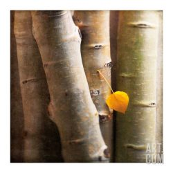 Aspen 1 Artists Giclee Poster Print by Glen and Gayle Wans, 30x30