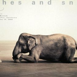 Boy Reading with Elephant Collectable Poster Print by Gregory Colbert, 51x35...