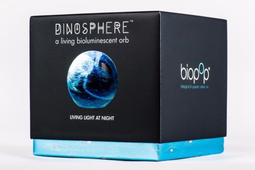 Buy Cheap Dino Sphere A Living Bioluminescent Orb Mini