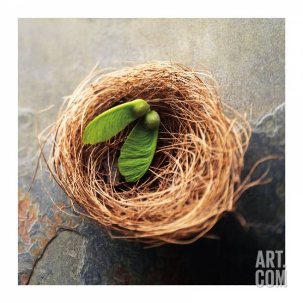 Buy Best Nest 2 Artists Giclee Poster Print by Glen and Gayle Wans, 30x30